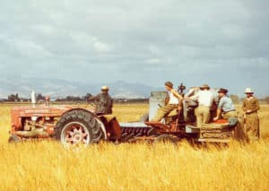 Old photo of family members on old tractor and plow being pulled through a field of golden wheat