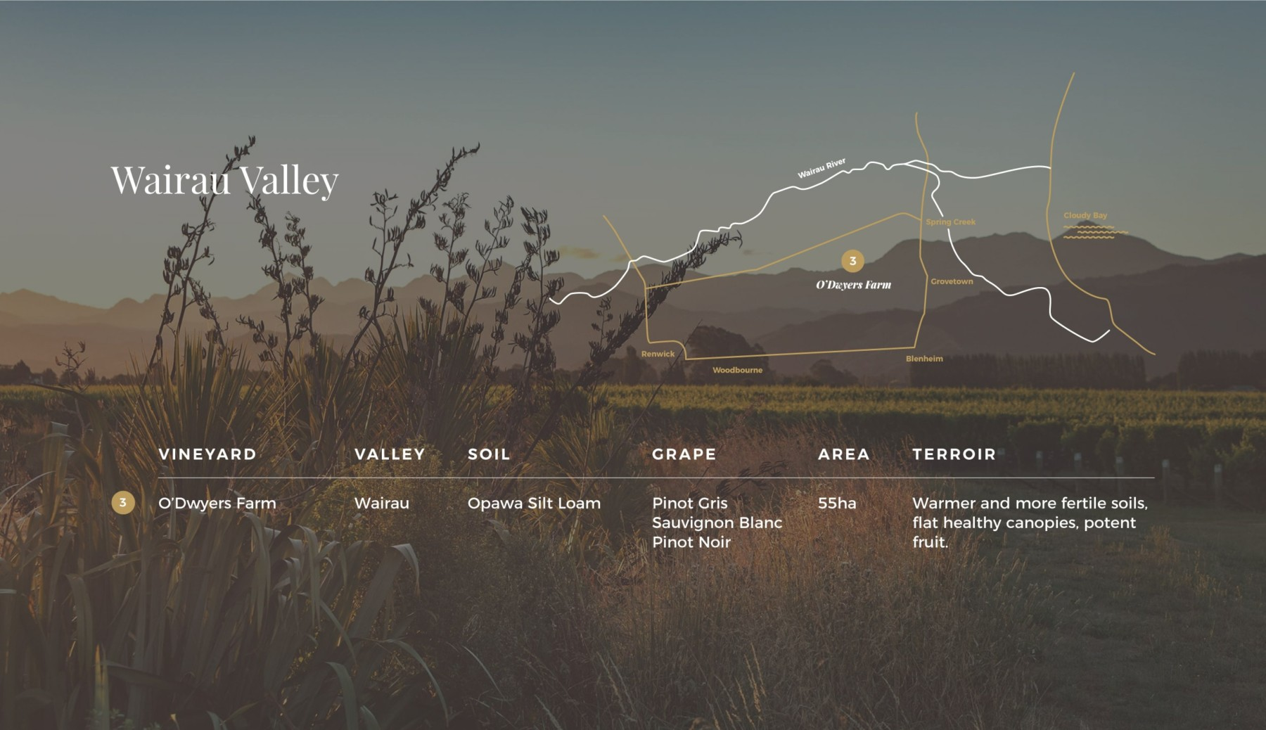 Map of Wairau Valley over laid on image of flax flowers in front of vines and Richmond Ranges at dusk