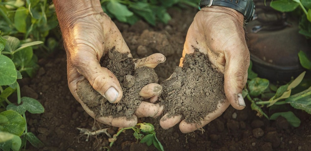 Hands in soil with plants beneath
