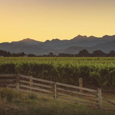 Wooden farm fence in foreground with grapes and vines behind, with Richmond Ranges in background at dusk