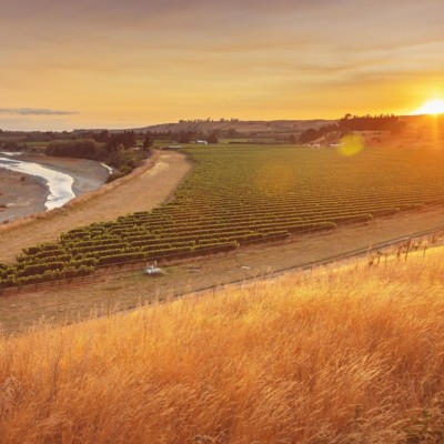 Riverside vineyard with sun setting in background, dry grass in foreground