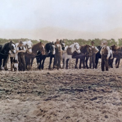 old photo with horses and plows in field with men in old farm cloths