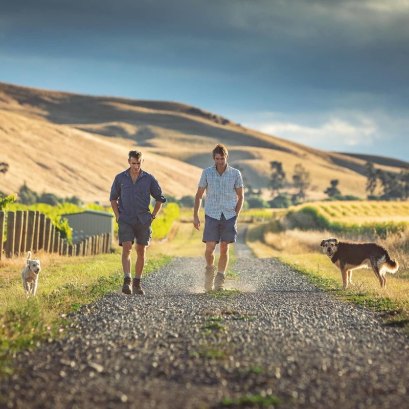 Brothers Andrew and James walking gravel road in vines with their dogs